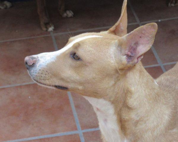 dog8384-16