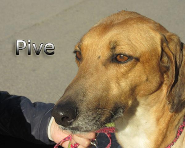 Pive-(6)web