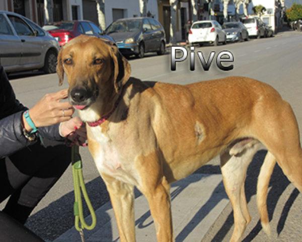 Pive-(7)web