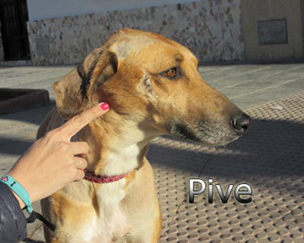 Pive-(8)web