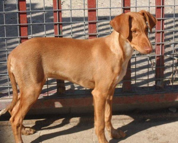 dog6354-13
