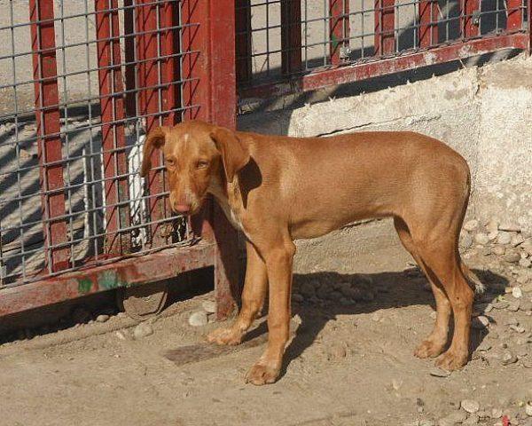 dog6354-8