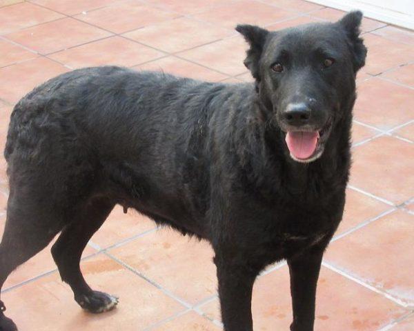 dog7600-16