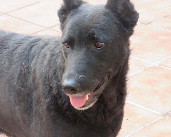 dog7600-17