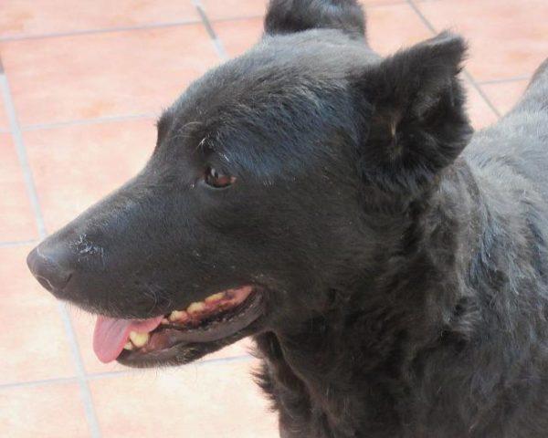 dog7600-19
