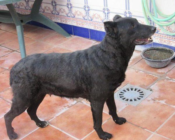 dog7600-20