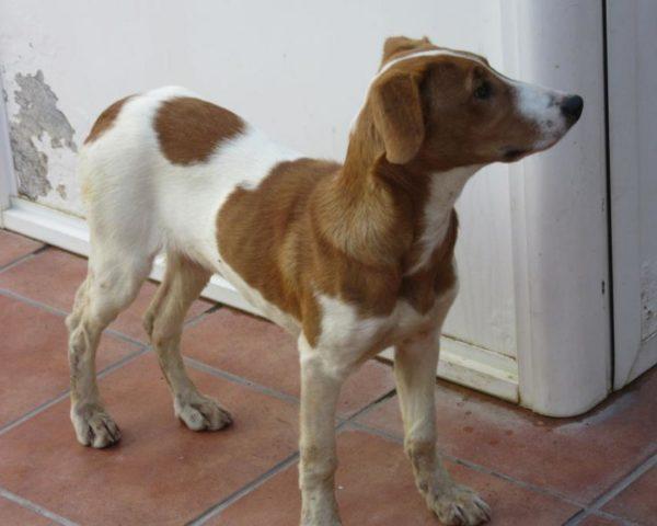 dog8494-22