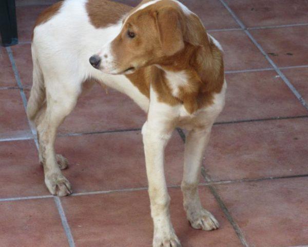 dog8494-7