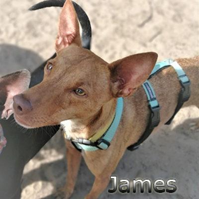 james2web