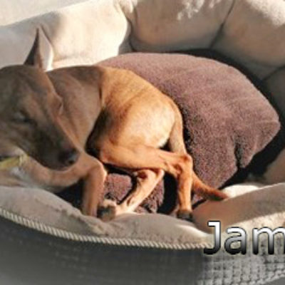 james5web