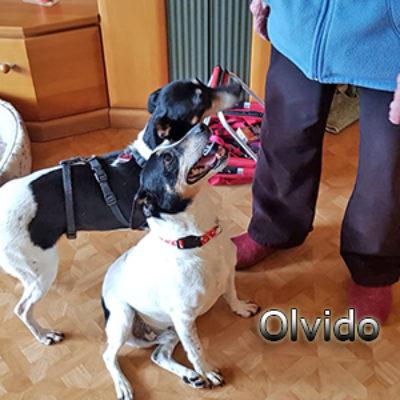 Olvido_Update_14052019-(12)web