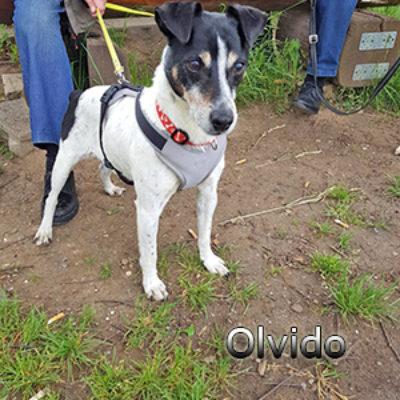 Olvido_Update_14052019-(4)web