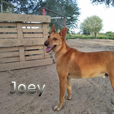 Joey_Update_10052019-(1)web