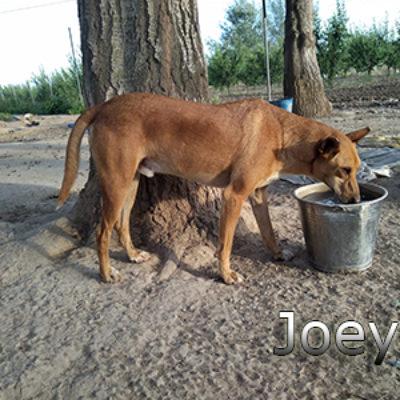 Joey_Update_10052019-(5)web