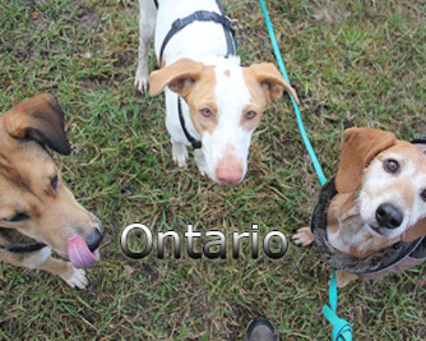 Ontario-(14)web