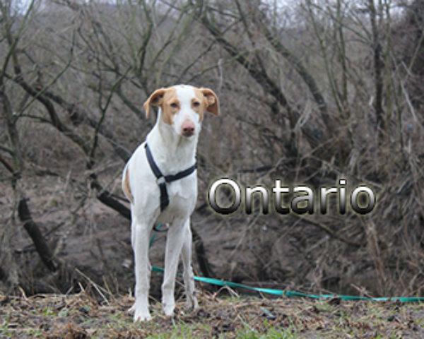 Ontario-(1)web