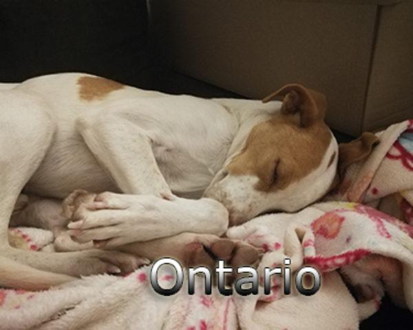 Ontario-(2)web