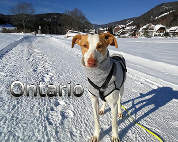 Ontario-(3)web