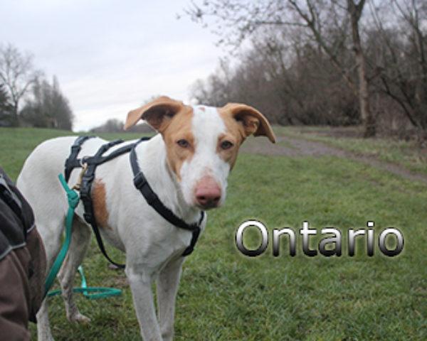 Ontario-(4)web