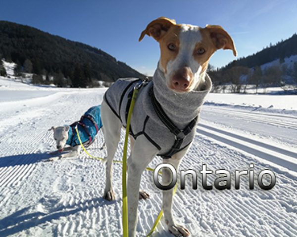 Ontario-(5)web