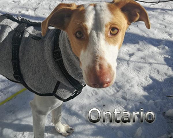 Ontario-(6)ts