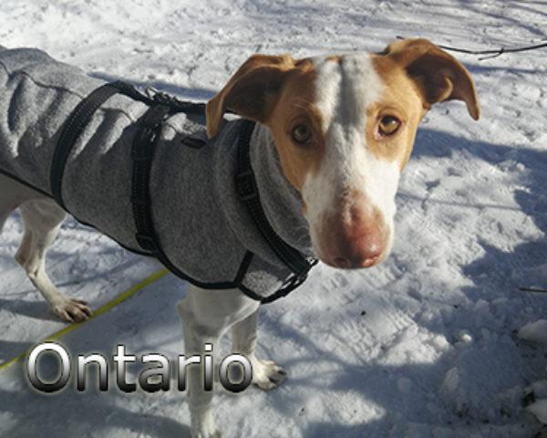 Ontario-(6)web