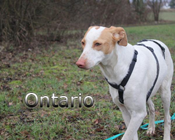 Ontario-(8)web