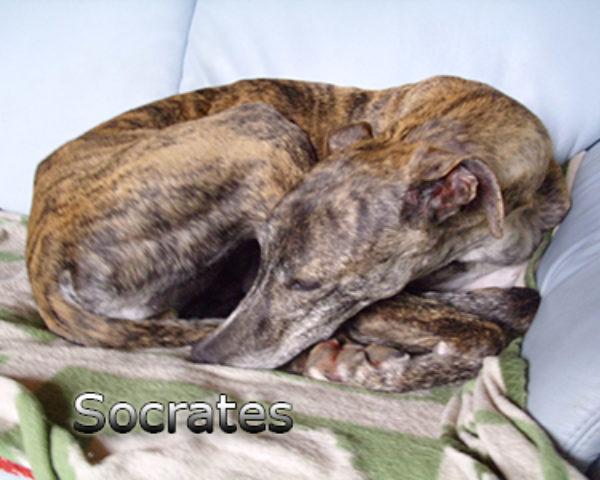 Socrates-(8)web