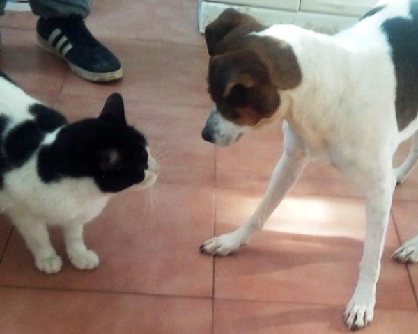 FLACA&CAT 1