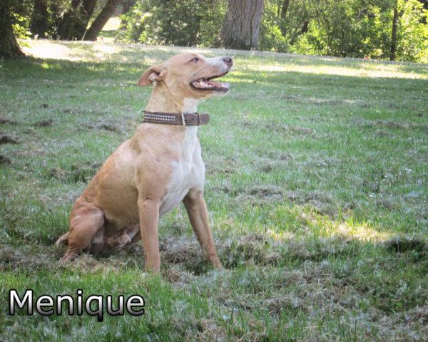 Menique (2)