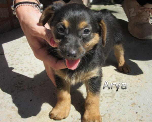 Arya-(1)