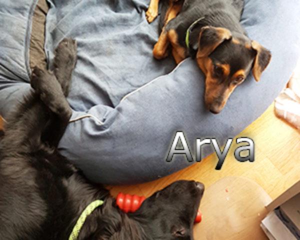Arya-(1)web