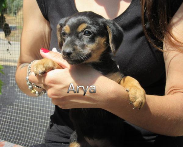 Arya-(2)