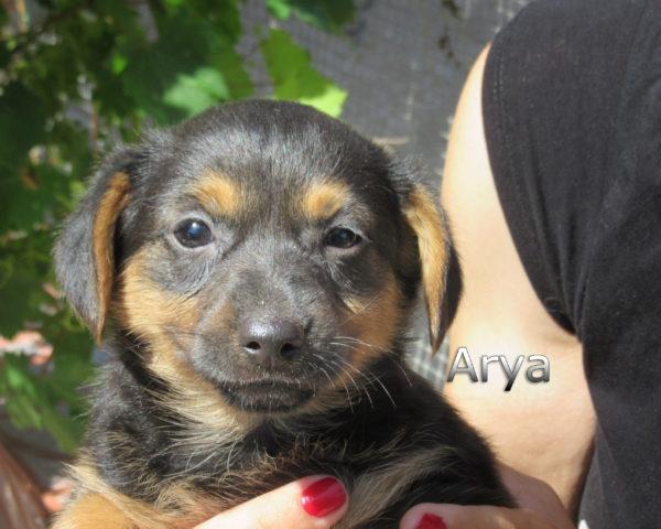 Arya-(3)