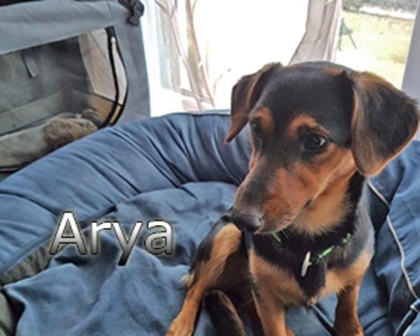 Arya-(3)web