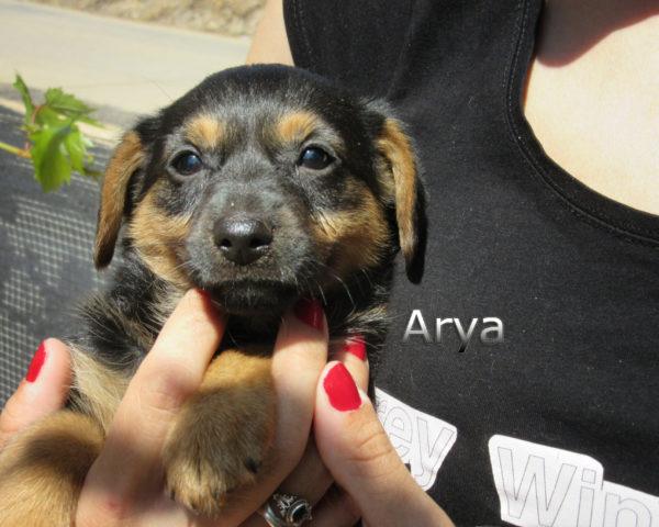 Arya-(6)