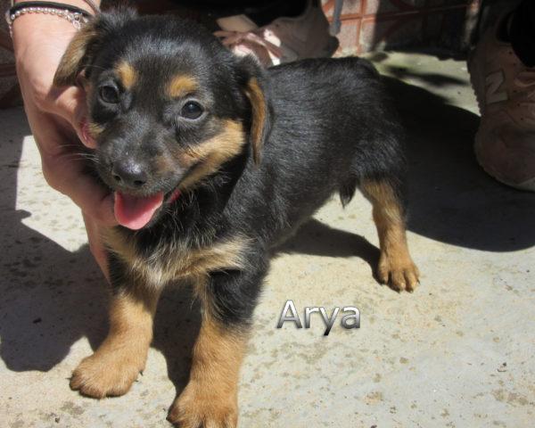 Arya-(8)