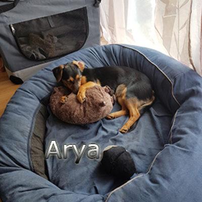 Arya_Update160419-(2)web