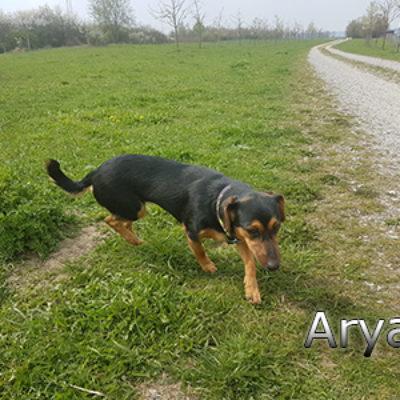 Arya_Update160419-(5)web