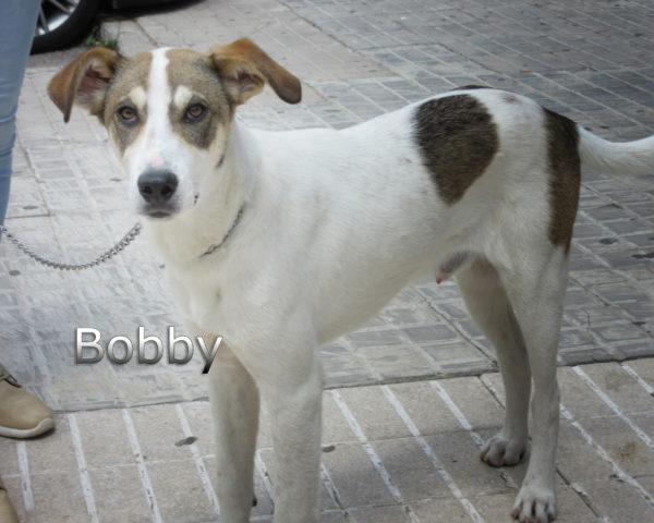 Bobby-(1)