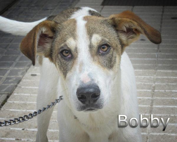 Bobby-(2)