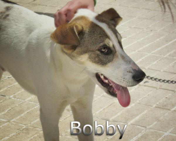 Bobby-(7)