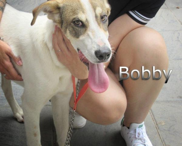 Bobby-(9)