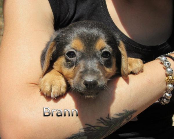 Brann-(3)