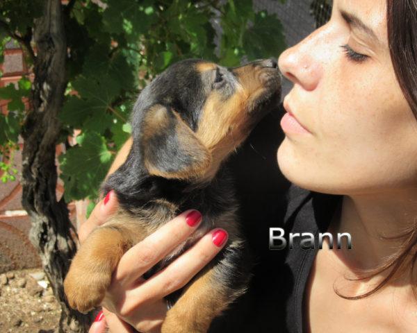 Brann-(4)