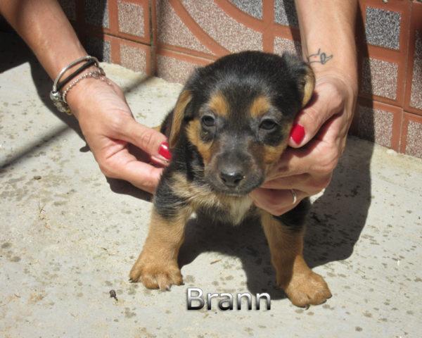 Brann-(5)