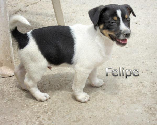 Felipe-(1)