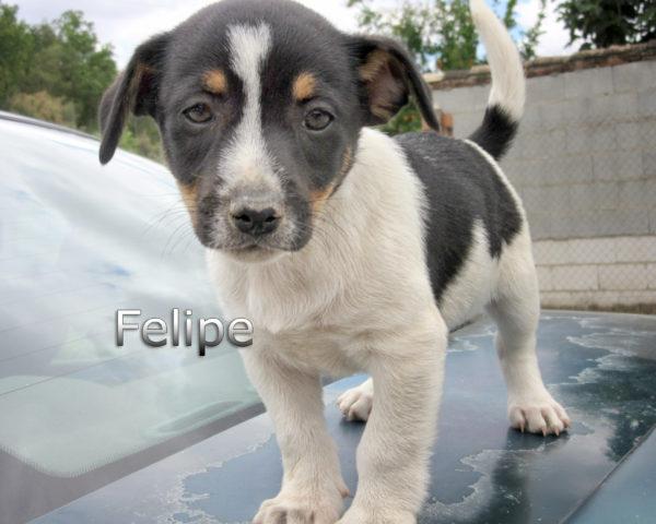 Felipe-(2)