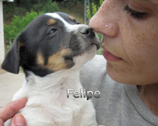 Felipe-(4)