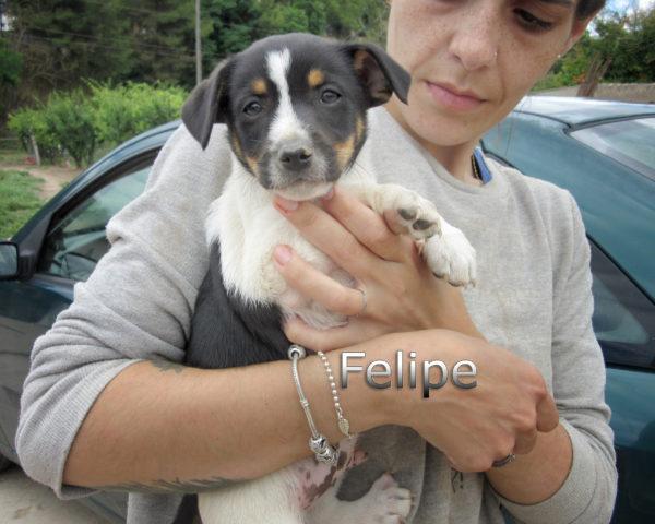 Felipe-(5)